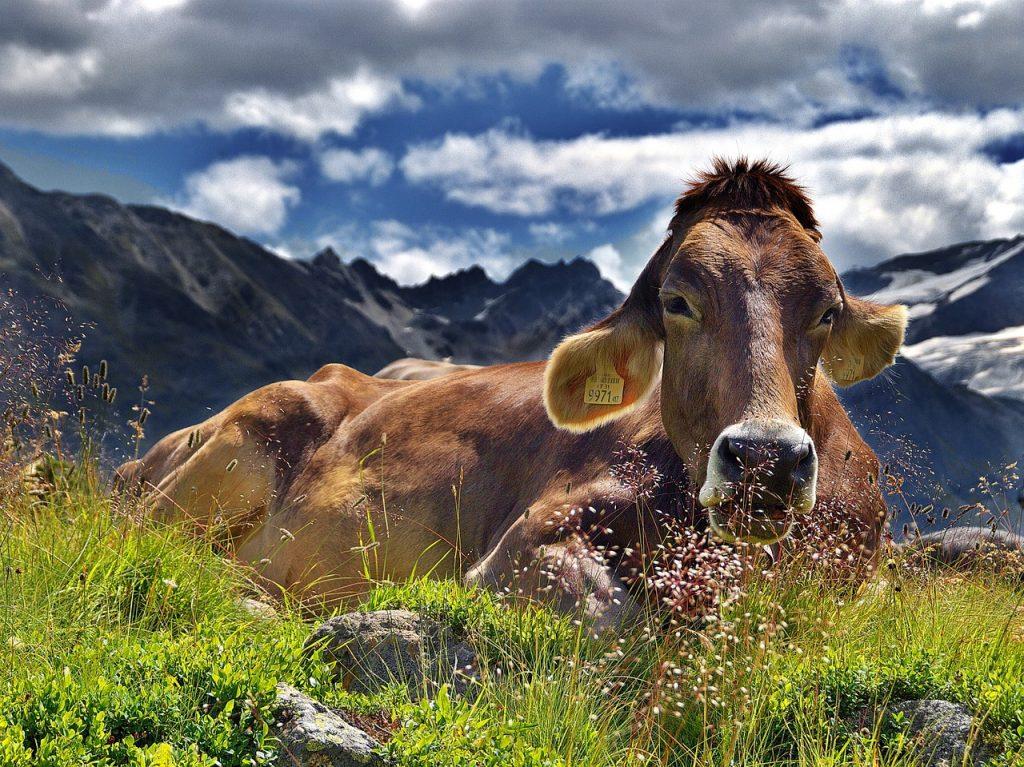 Jak wygodnie i bezpiecznie zważyć zwierzęta gospodarskie?