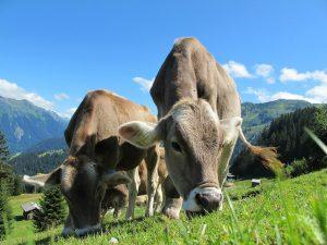 Wagi, które mają zastosowanie w rolnictwie